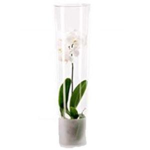 Orchideen Vase, Vase Orchie, günstig bei kds rent mieten und leihen